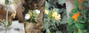 e-Flora of Sultanate of Oman